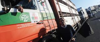 Suinicultores queixam-se que foram excluídos de fundos comunitários