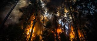 Incêndios: Mais de 300 operacionais combatem 36 fogos no país