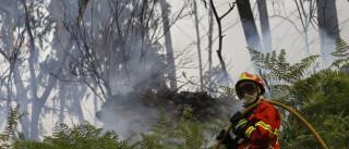 Fogo florestal que deflagrou hoje em Vila Real está extinto