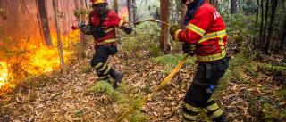 PCP Madeira quer reforço do corpo de bombeiros municipais no Funchal
