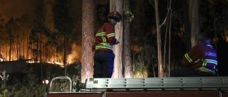 Centena e meia de bombeiros combatem fogo em Cabeceiras de Basto