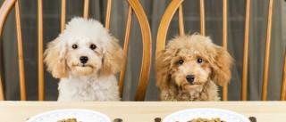 Erros que comete quando dá comida ao seu animal