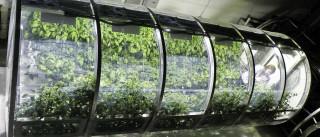 Esta poderá ser a solução da NASA para alimentar os astronautas no espaço