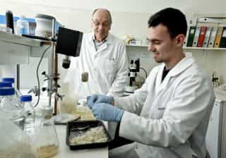 Investigadores retiram de penas e água partículas que regeneram a pele