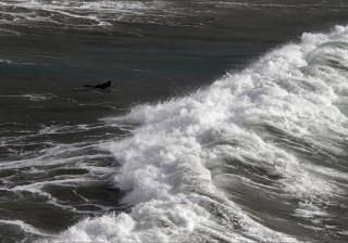 Surf cresce como produto turístico e fomenta economia todo o ano