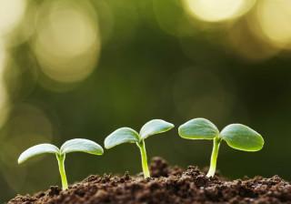 Portugueses criam sistema fechado e automático para cultivo de plantas