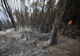 Governo abre concurso para fileiras do pinho, sobro e eucalipto