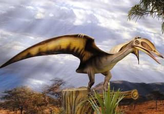 Um dos fósseis mais raros do mundo está à venda na internet