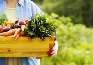 Legumes biológicos em hortas caseiras podem funcionar como vacinas