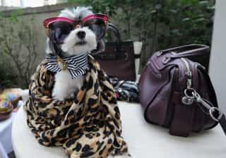A cadela que ganha quase mil euros por cada publicação no Instagram