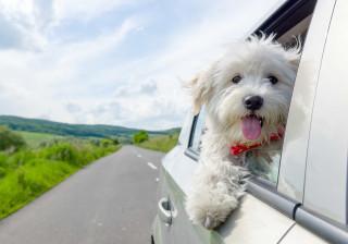 Este domingo leve o seu cão a passear... de Uber