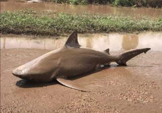 Ninguém ligou aos avisos das autoridades até um tubarão aparecer na rua