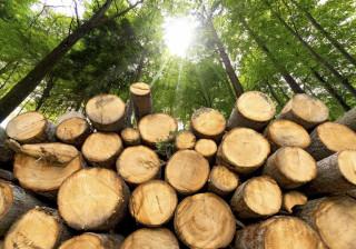Portugueses criam solução para o plástico e para a indústria da madeira