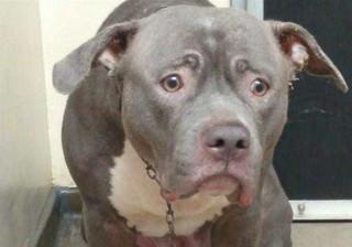 Este é o olhar de uma cadela que percebeu que foi abandonada