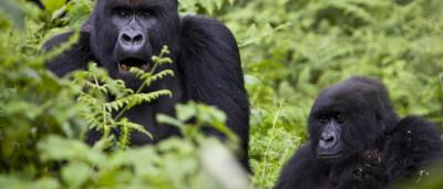Estas 30 espécies estão em vias de extinção. E a culpa também é nossa