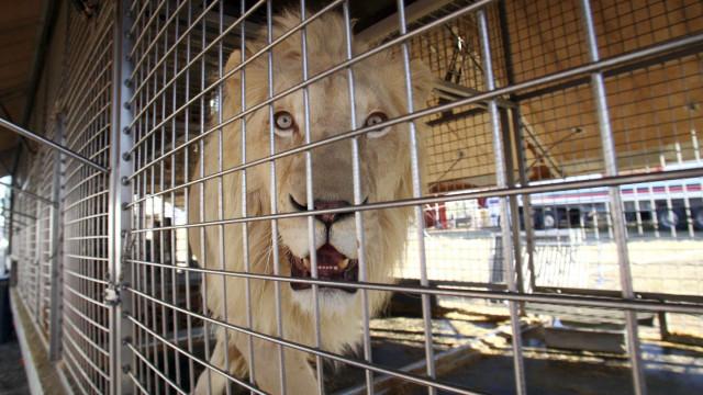 Proibição de utilização de animais nos circos debatida no parlamento