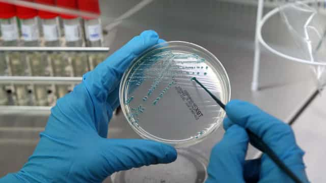 Champalimaud junta-se a vinte laboratórios para estudar cérebro