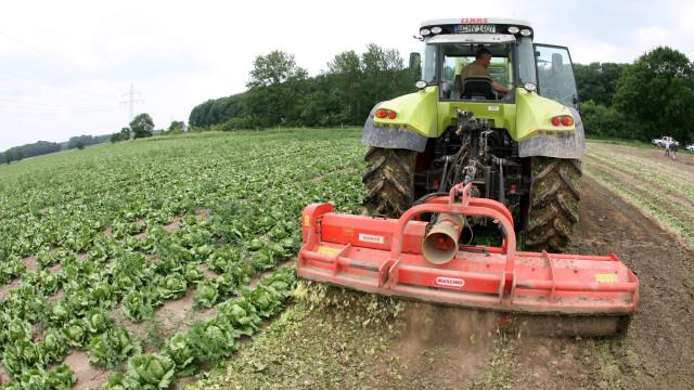 Parcerias com países mediterrânicos podem mudar agricultura portuguesa