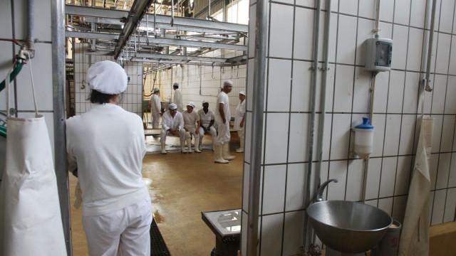 Veterinários suspendem greve após entendimento com o Governo