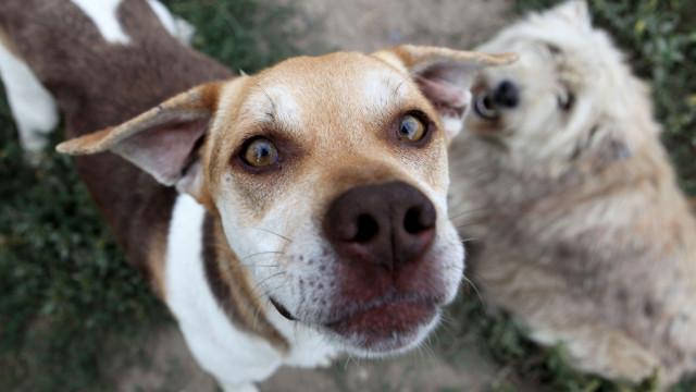 Mais de 40 mil cães e gatos recolhidos em 2017