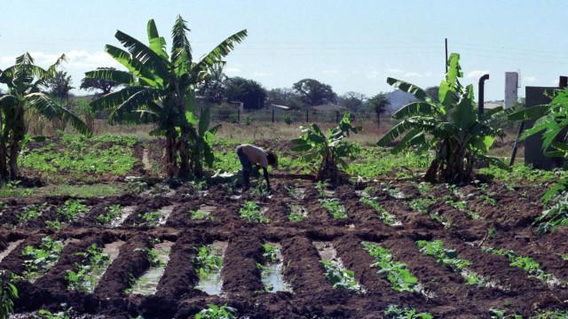 Governo moçambicano negoceia 64,9 milhões com Banco Mundial