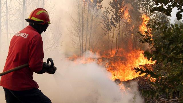Fogo em Penacova já mobiliza quase 300 operacionais
