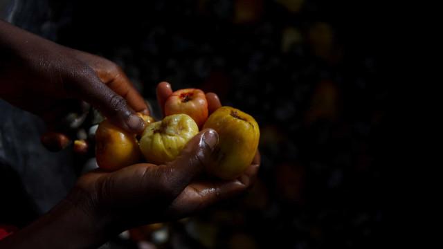 Guiné-Bissau já exportou 147.410 toneladas de castanha de caju