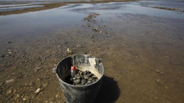 Polícia Marítima apreende mais de duas toneladas de amêijoa-japónica