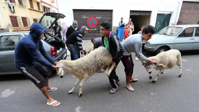 Cerca de quatro milhões de carneiros abatidos para a festa do sacrifício
