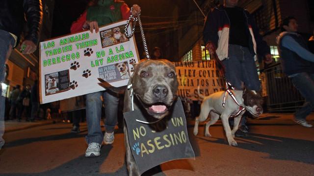 PSP vai fiscalizar segurança de animais de companhia e cães perigosos