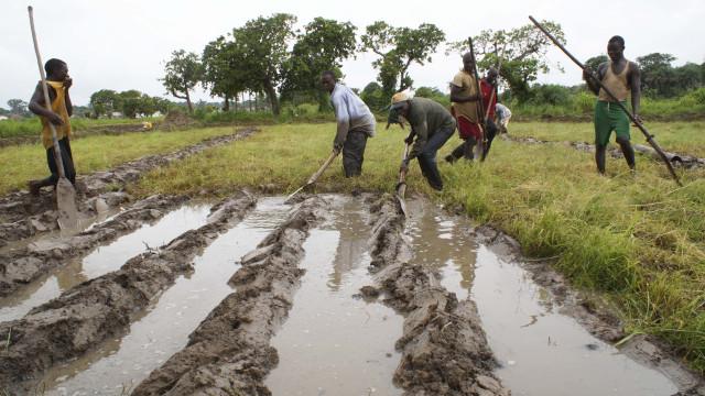 Avaliados programas de financiamento nos agricultores de São Tomé