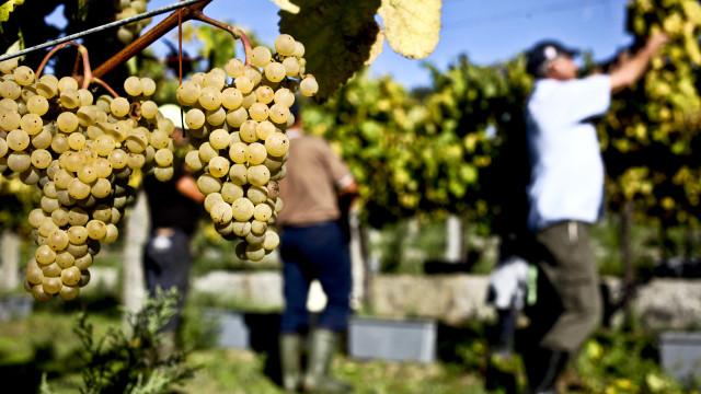 """Vinho Verde Wine Fest regressa ao Porto """"com programa para a família"""""""
