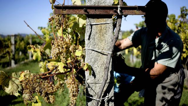 Vinhos alvarinho entre os vencedores do 'Concurso Melhores Verdes'