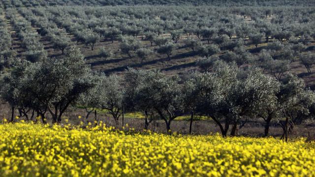 Máximos históricos na produção de pomares e olival em 2016/17