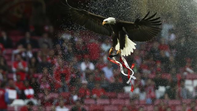 TAD aceita providência cautelar do Benfica sobre jogo à porta fechada