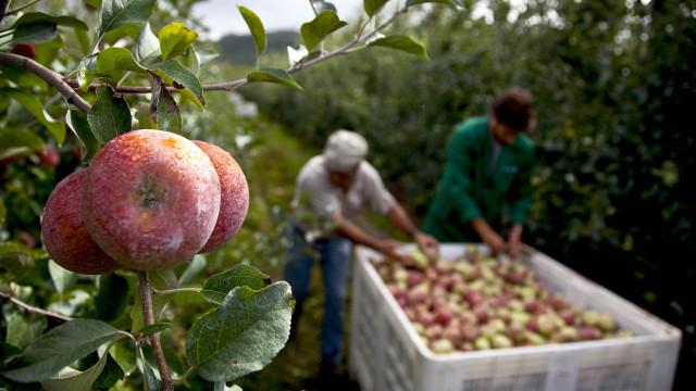 Produtores agrícolas portugueses são os mais velhos da União Europeia