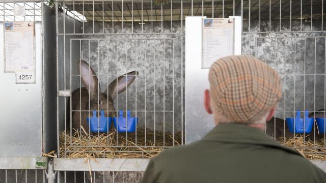 Coelhos penhorados em Estarreja vão ser removidos na quinta-feira