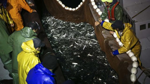 Governo paga 1,4 mil milhões aos pescadores por captura da sardinha