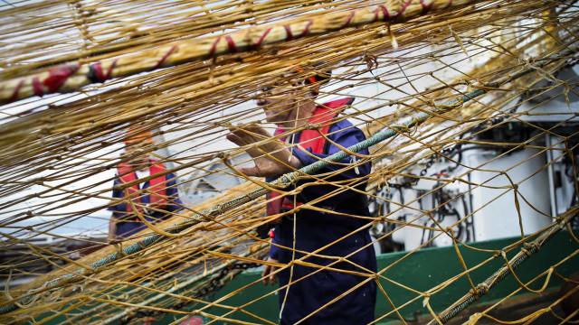 Federação das Pescas dos Açores pede Orçamento sem cortes para o setor