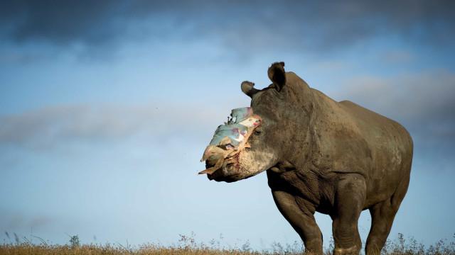 Botsuana disposto a ajudar Moçambique a combater caça furtiva