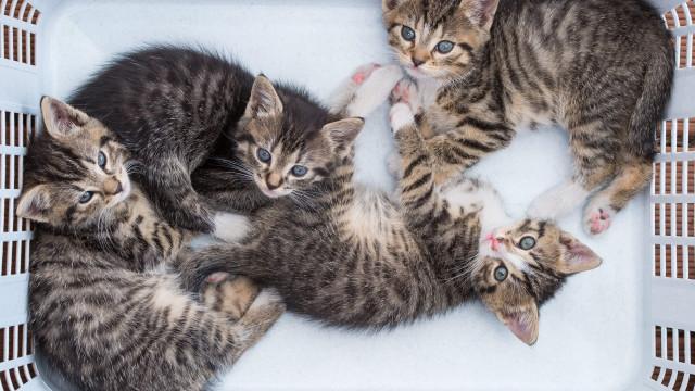 Associação em Almada faz esterilizações a gatos de rua há cinco anos