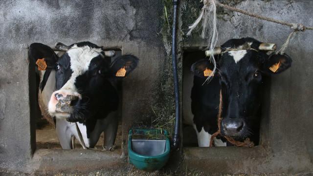 Preço do leite deverá manter-se em 2019