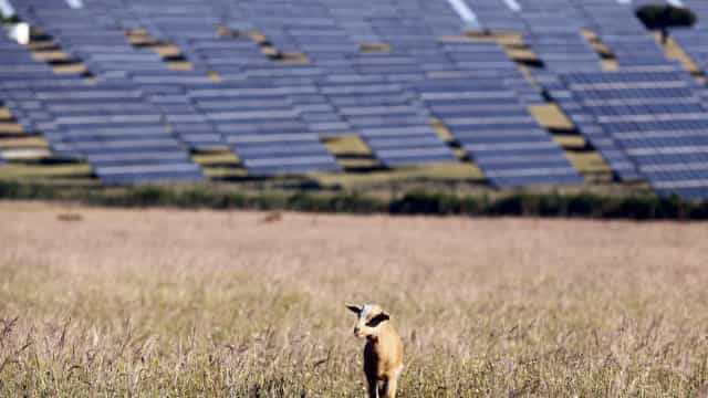 Aposta no fotovoltaico passa pela produção descentralizada de energia