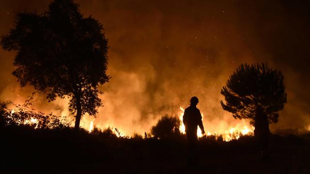 Um ano depois do fogo, Arouca e S. Pedro do Sul recuperam da calamidade