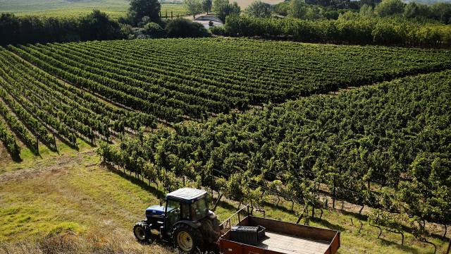 Portugal perdeu 47 mil hectares de vinha em dez anos