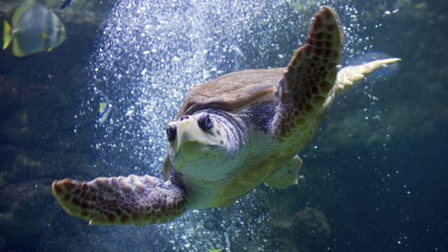 Quatro detidos na posse de tartarugas mortas em Cabo Verde
