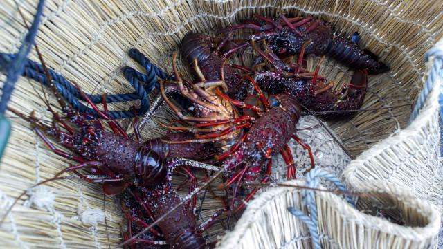 Portugal é o país que mais crustáceos compra a Moçambique
