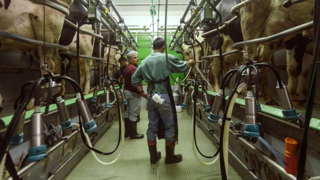Fim das quotas leiteiras foi negativo. Opinião é consensual