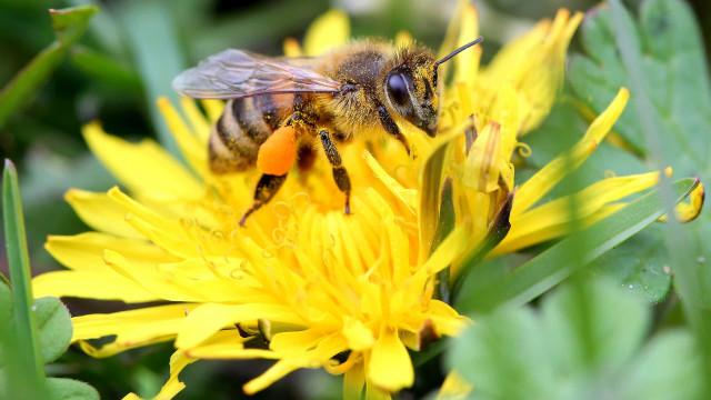 Quebra de 90% na colheita abre feira da Lousã a mel sem certificação
