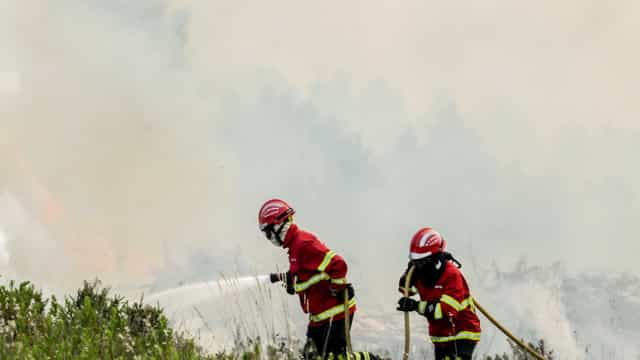 Bombeiros combatem fogo em zona de mato e pinhal no Seixal